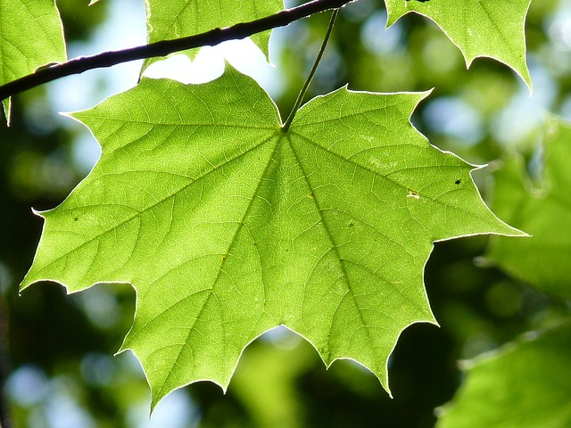 Close up of a leaf on a tree