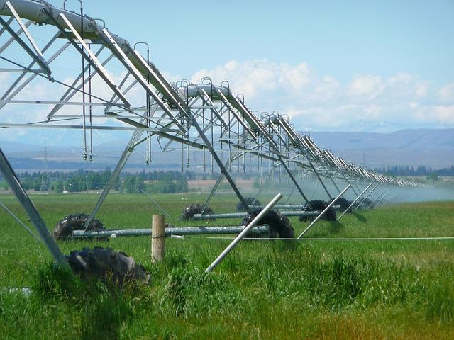 Irrigation sprinkler line set up in a grassy field
