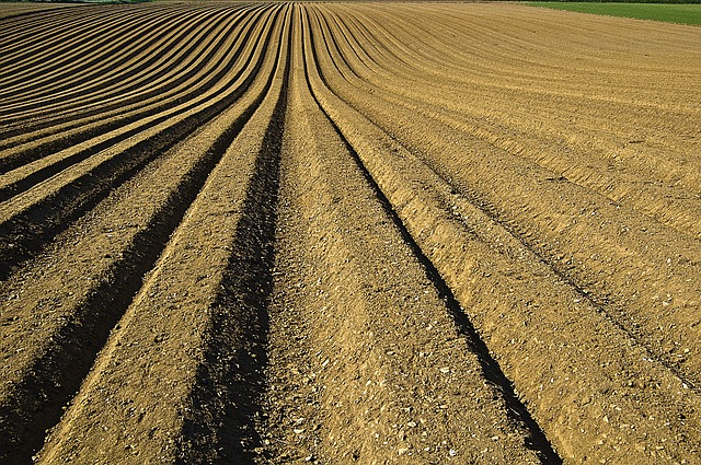 Field with loose top soil and extensive edging