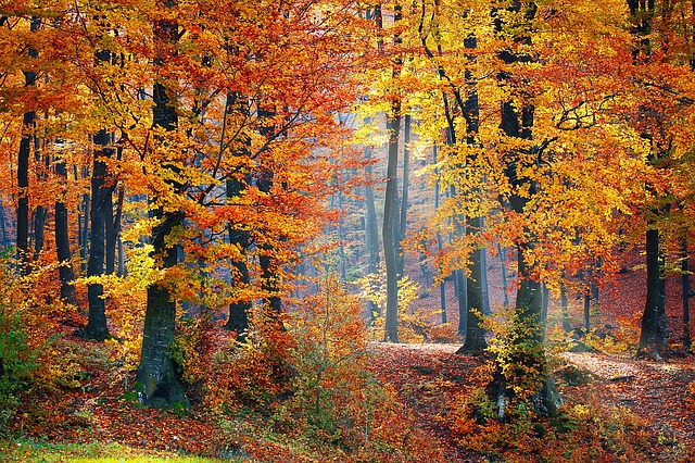Image of bright orange, yellow, and red colored trees in autumn