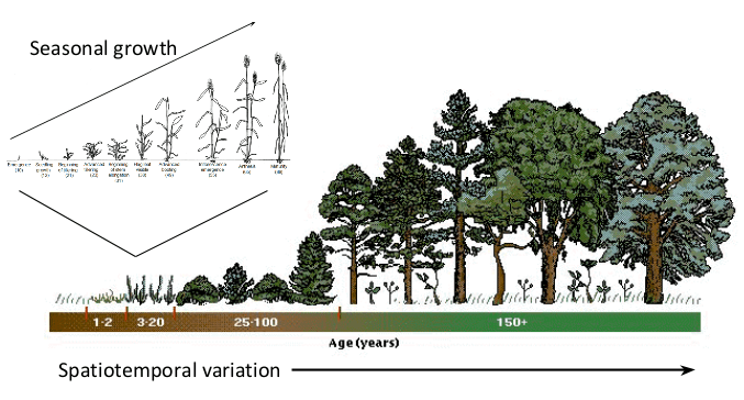 Diagram depicting seasonal growth plotted against spatiotemporal variation