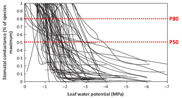 Leaf water potential chart