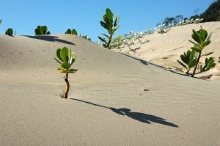 Image of plants growing out of the sand