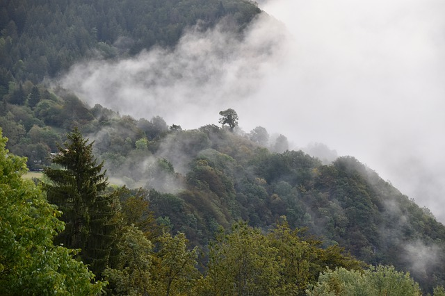 Image of a forest with clouds and fog everywhere
