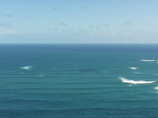 "Public Lecture: Professor Alison Bashford, ""World History and the Tasman Sea"""