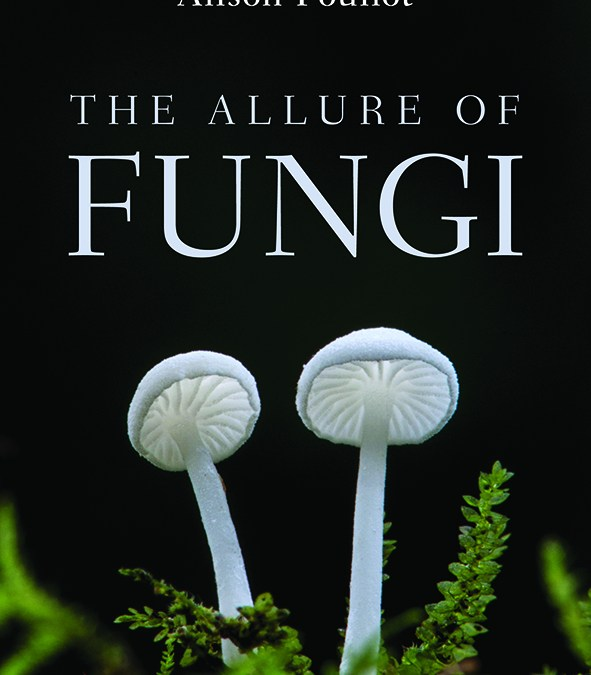 Book launch: The Allure of Fungi