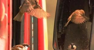 একটি ছোট্ট ভালোবাসা কিংবা ভালো না বাসার গল্প। ছবি : ইমরান পারভেজ