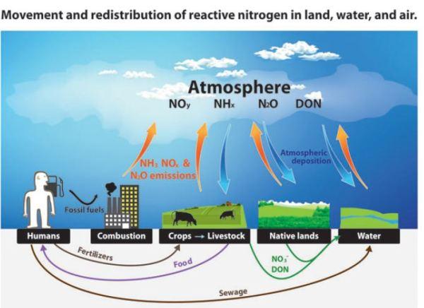 nitrogen-cycle