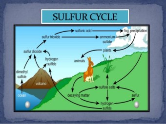 sulfur-cycle-8-638