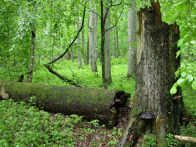Manifeste pour une forêt primaire en Europe de l'Ouest