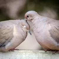 Receita para enxaqueca: amor e carinho