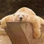 Relaxamento e enxaqueca – Aprendendo a Relaxar