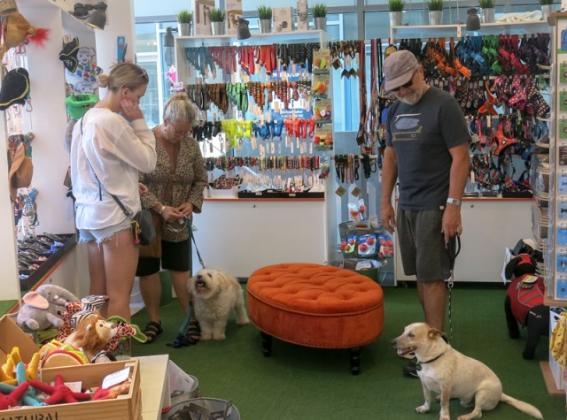 Inside Peticular, specialist pet shop at Peregian Beach, with 2 dogs