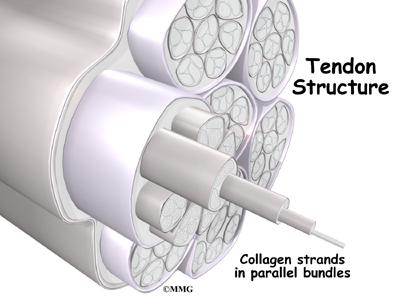 Medial Epicondylitis: Golfer's Elbow | Houston Methodist
