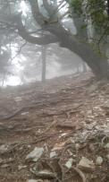 ....ομίχλη