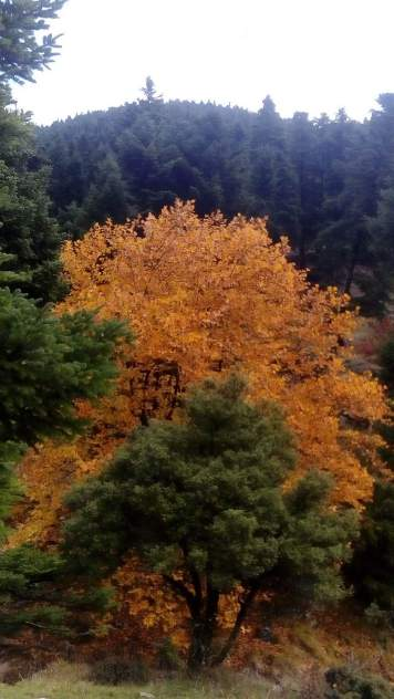 Φθινόπωρο στα Λάμπεια όρη