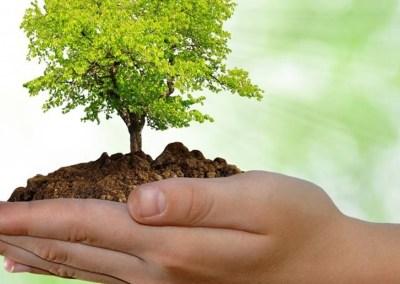 Formulario de solicitud de aprovechamiento forestal arboles aislados ajustado con Decreto 1076