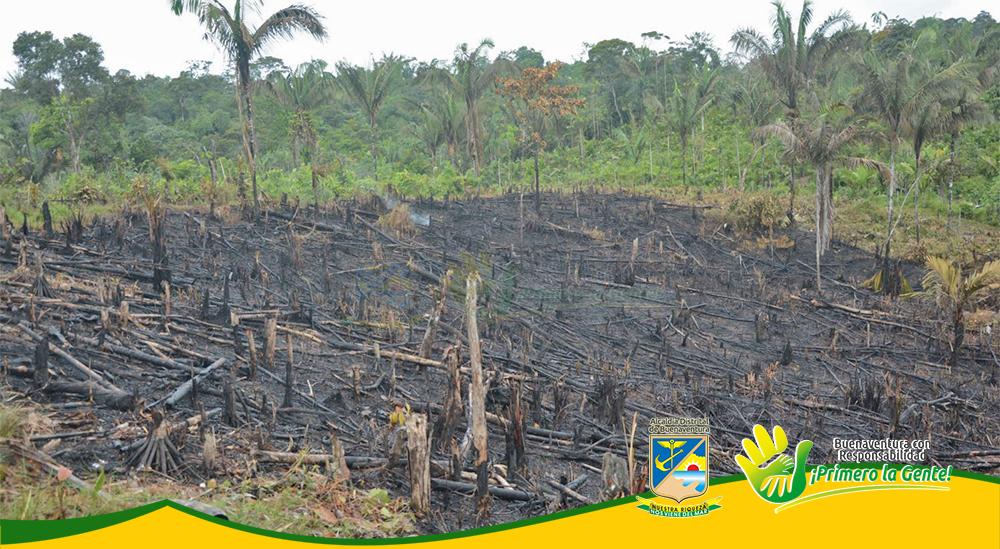 Incendio Forestal (1)