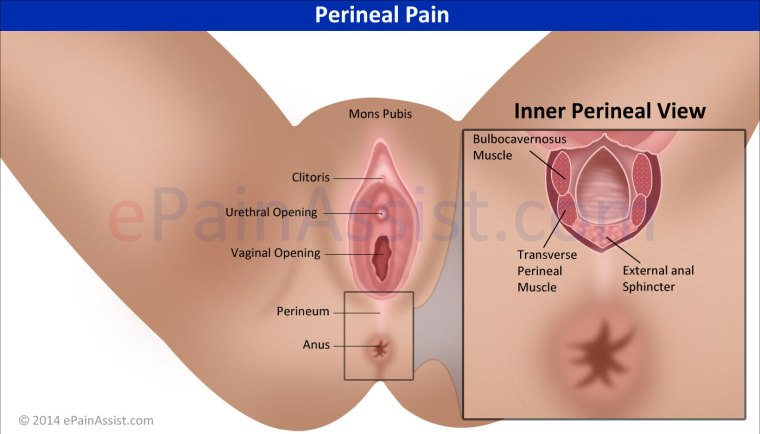 Pruritus perineum anal redness pain