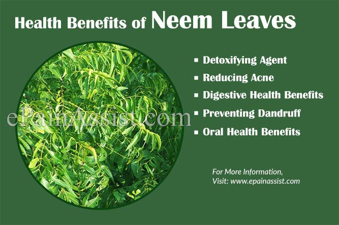 neem leaf benefits | Jidileaf co