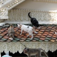 How much would YOU pay to be bit by a rabid monkey: More good times in Phnom Penh