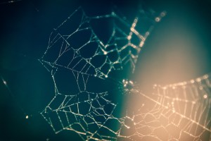 stock image of a spider web