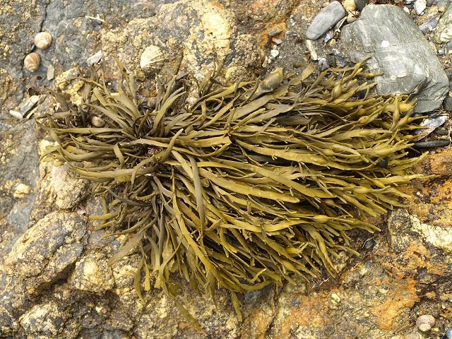 Kelp Fertilizer Benefits