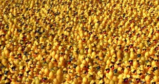 20000 ducks video