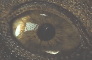 JURASSIC WORLD 2 Trailer Teaser