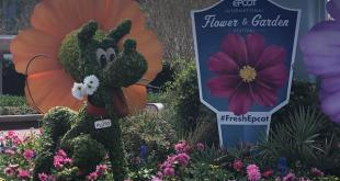 Review: Epcot's Flower & Garden Festival Part 1 | | DisKingdom.com | Disney | Marvel | Star Wars