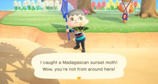 I Finally Found A Bug Blathers Doesn't Hate In Animal Crossing: New Horizons