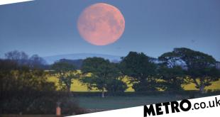 Super Flower Moon set to grace UK skies as final supermoon of 2020