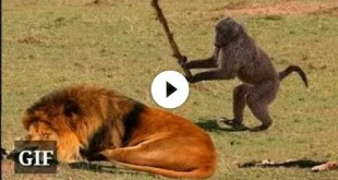 Funny Animals ; Funny video