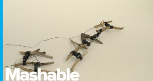 Creepy Crawling Robot Has a Skeleton Made From Tree Branches