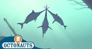 Octonauts - Kwazii Duels the Swordfish | Compilation | Cartoons for Kids