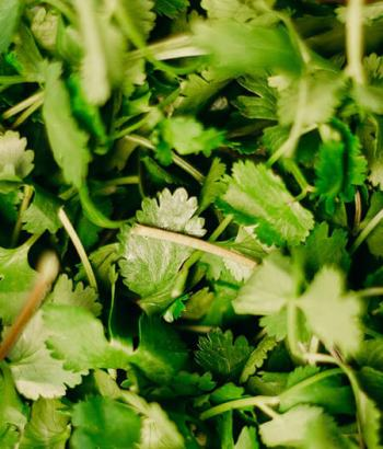 Parsley are effective in cleansing the kidneys and promotes healthy digestion
