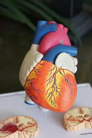 Collagen promotes good heart health
