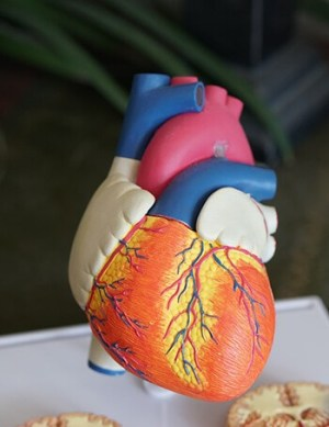 Good levels of magnesium can help to maintain a regular heartbeat and normal blood pressure.