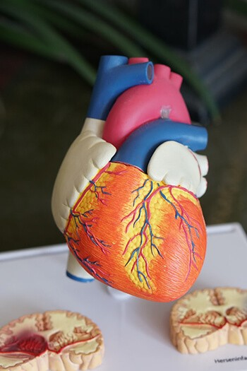 has good cholesterol that helps reduce the risk of heart disease