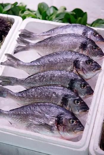 omega 3 fatty acids to speed up internal process