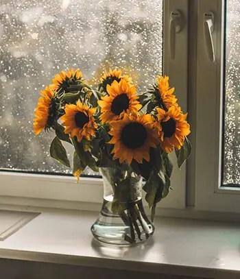 remove odor from vase