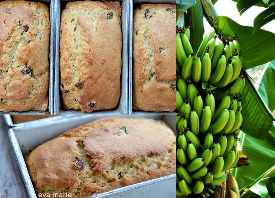 Bananacollage-2-wb