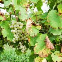 Five Keuka Lake Wineries To Visit In Finger Lakes Wine Country