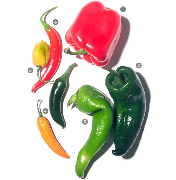 A visual guide to peppers
