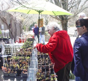 Customers shopping at Garden Vision Epimediums booth at Stonecrop Gardens Plant Sale, Cold Spring, NY