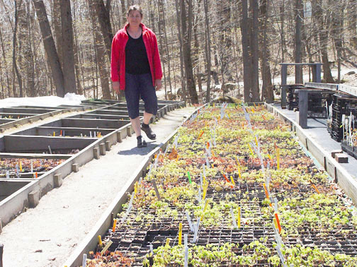 Karen with cold frames in April
