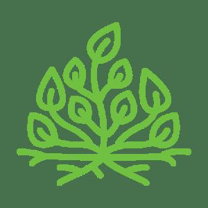 Epiphyte Isolation & Vegetalisation - Vegetalisation toit & murs