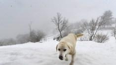 Cinco histórias emocionantes de cães que salvaram pessoas