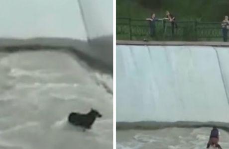 Corrente humana resgata cão preso na correnteza de um canal (Vídeo)