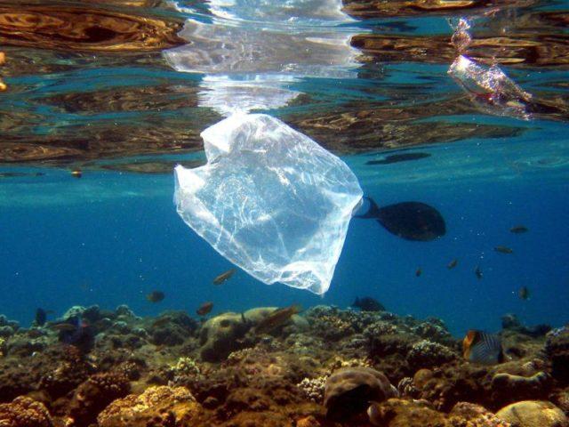 Plastikmüll setzt den Lebewesen im Meer erheblich zu. Foto: Mike Nelson/Archiv/dpa
